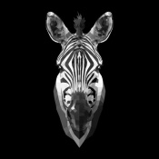 NAXART Studio - Black Zebra Head